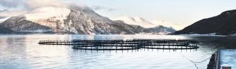 Organische aquacultuur: een sector in opmars