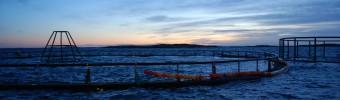 La filière du saumon d'élevage place haut la barre en se penchant sur les problèmes de durabilité