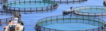 FAO: Gekweekte vis haalt wilde vis in op wereldwijde leveranciersmarkt