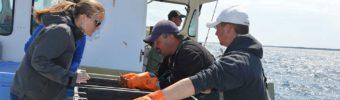 Comment nous surmontons d'importants vents contraires venant du marché pour soutenir les stocks européens de homards canadiens
