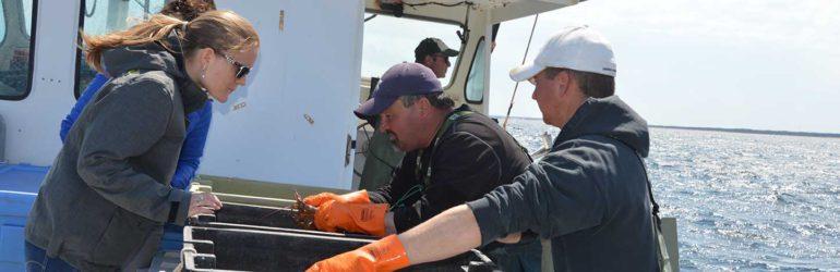 Jennifer (aankoper kreeft bij Pittman Seafoods) inspecteert de vangst aan boord.