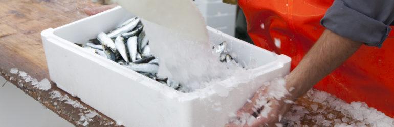 Voordelen bevroren vis