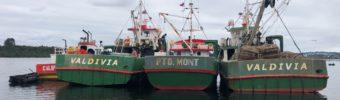 Zu Besuch beim größten Produzenten von Königskrabbenfleisch in Chile