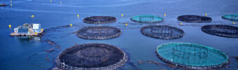 On land and sea: fish farmers continue to broaden their horizons