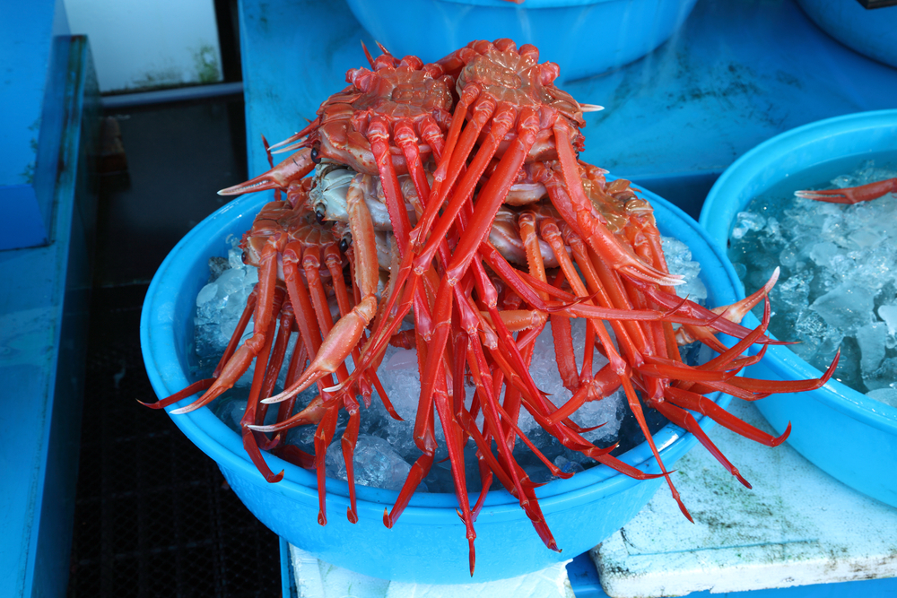 Korean red snow crab
