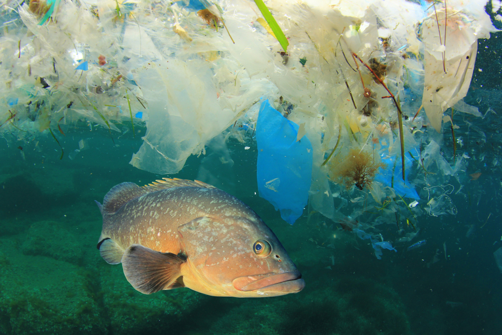 Plastic pollution fish