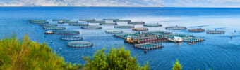 How aquaculture is progressively meeting market expectations