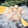 frozen scallops on ice