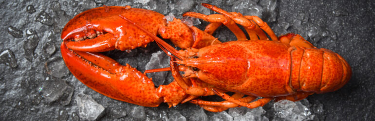 UHP lobster
