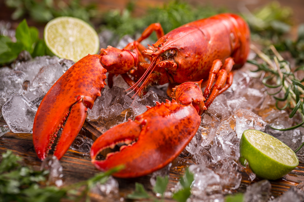 Lobster UHP